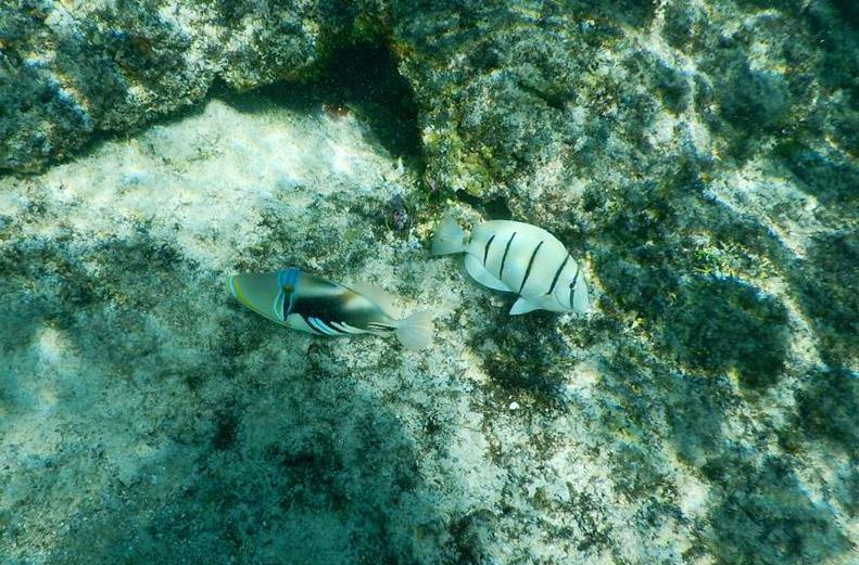 ファイファイビーチの魚