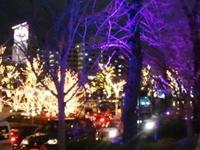 都内近郊の癒しのイルミネーションスポット:六本木のイルミネーション3