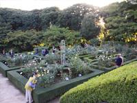 旧古河庭園のバラフェスティバル:西洋庭園2