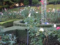 旧古河庭園のバラフェスティバル:西洋庭園3